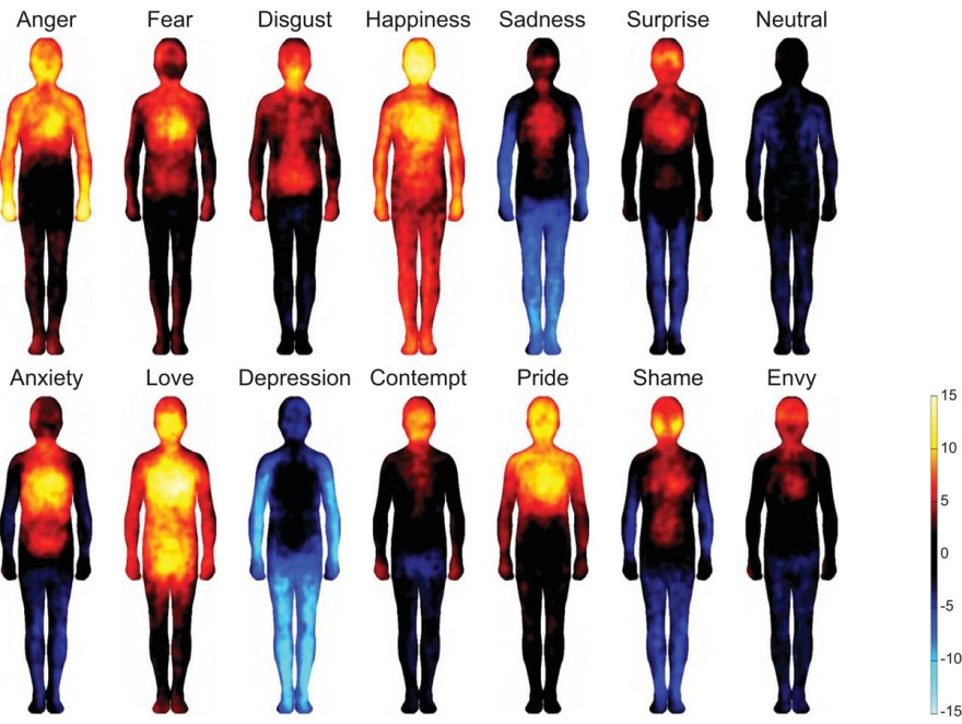 Emotions in your body